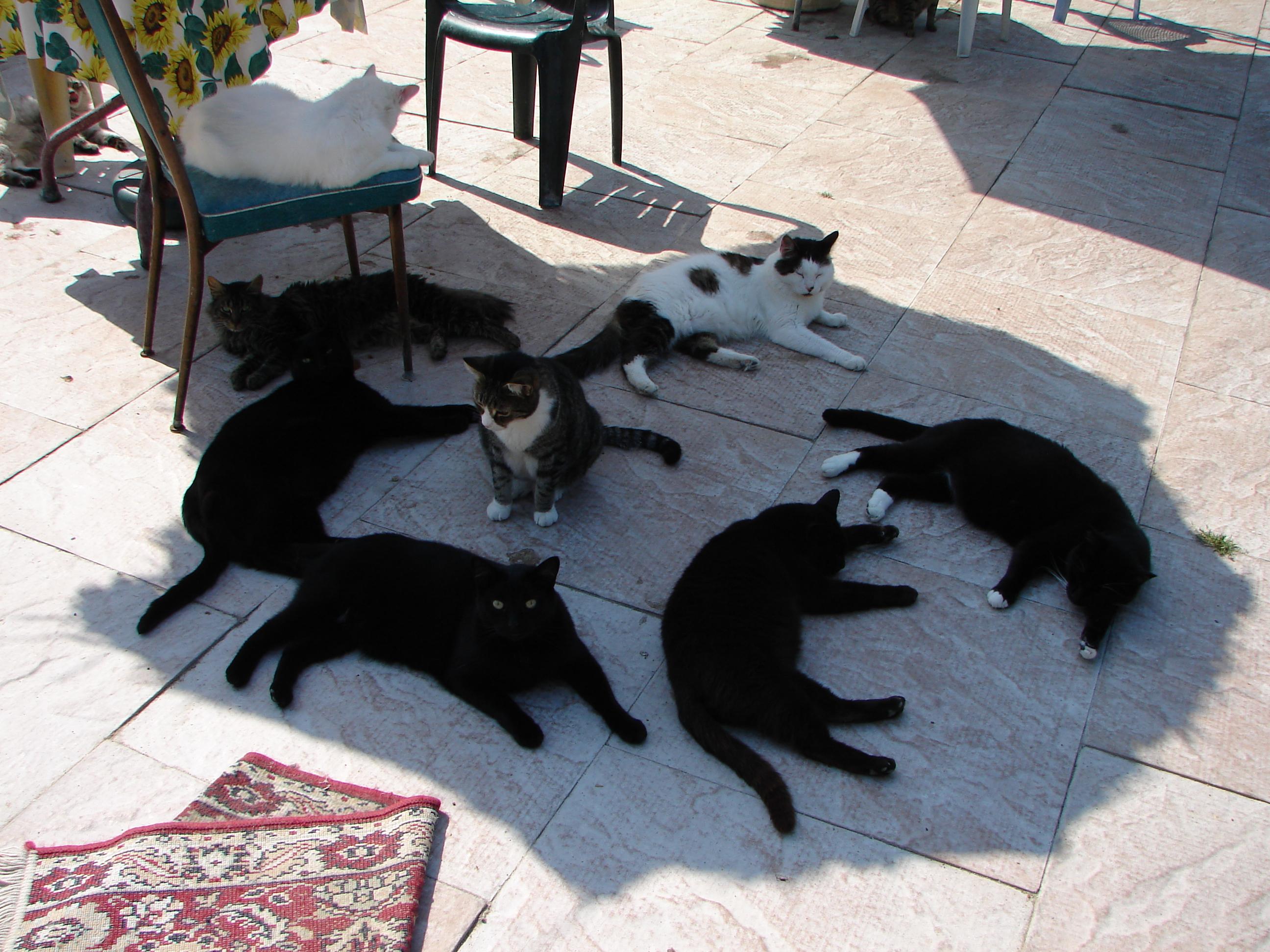 Приколы фото кошки 7 фотография